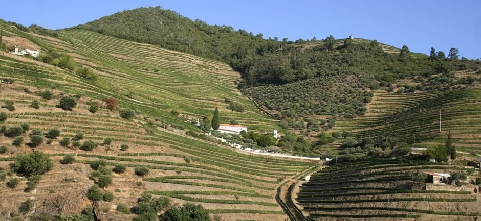 Quinta de Val da Figueira, Douro